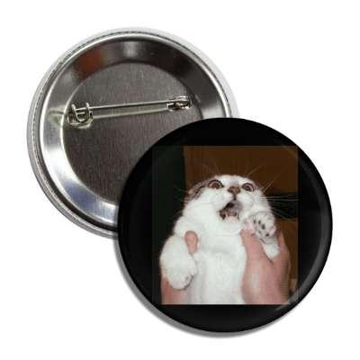 gasp lolcats kitteh kitties kittens cat cats internet meme memes funny sayings popular pop reddit 4chan