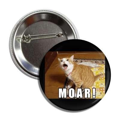 moar lolcats kitteh kitties kittens cat cats internet meme memes funny sayings popular pop reddit 4chan