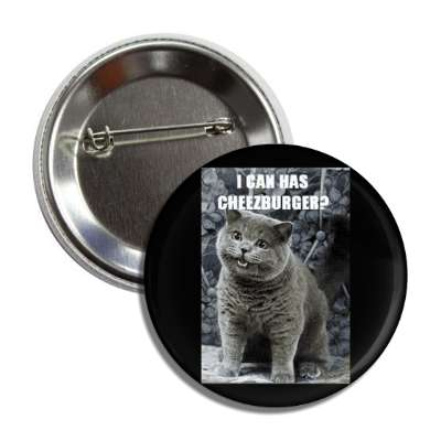 i can has cheezburger lolcats kitteh kitties kittens cat cats internet meme memes funny sayings popular pop reddit 4chan