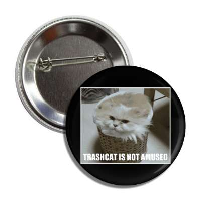 trashcat is not amused lolcats kitteh kitties kittens cat cats internet meme memes funny sayings popular pop reddit 4chan