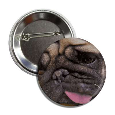 pug close up button