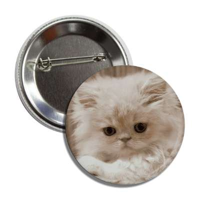 white kitten cute button